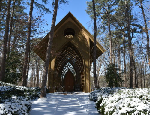 6 Things To Do in Bella Vista in the Winter