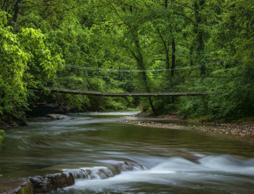 Tanyard Creek. Getting away is closer than you think.